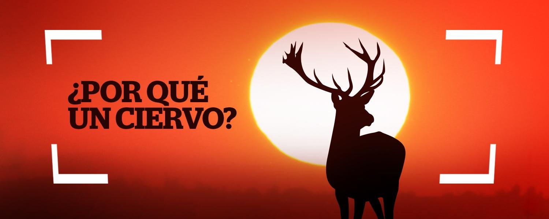 ciervo Uribe Trucks amanecer | @javygo